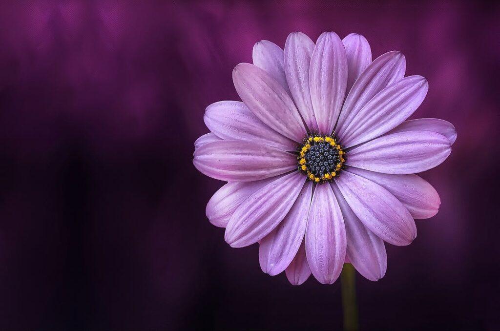 Designa med blommor och växter